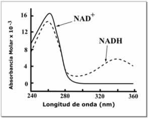 Espectros de absorbancia del NAD+ y NADH