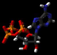 Estructura en 3D del ATP