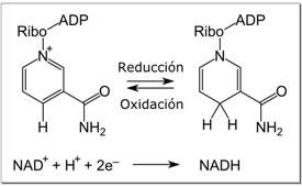 Reacción redox del NAD